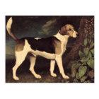 Ringwood, a Brocklesby Foxhound, 1792 Postcard