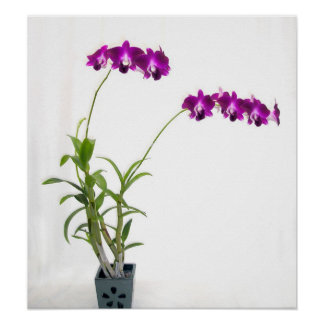 Rinnapa Dendrobium Orchid Plant Poster