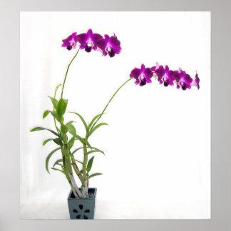 Rinnapa Dendrobium Orchid Plant Print