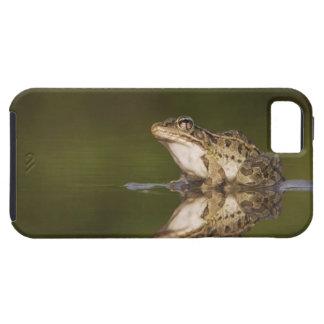 Rio Grande Leopard Frog, Rana berlandieri, adult iPhone 5 Case