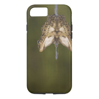 Rio Grande Leopard Frog, Rana berlandieri, adult iPhone 8/7 Case