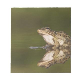 Rio Grande Leopard Frog, Rana berlandieri, adult Notepad