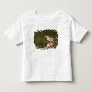 Rio Grande Leopard Frog, Rana berlandieri, adult T Shirt