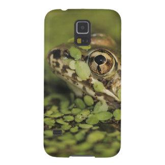 Rio Grande Leopard Frog, Rana berlandieri, Case For Galaxy S5