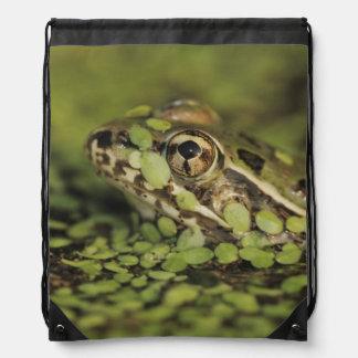 Rio Grande Leopard Frog, Rana berlandieri, Drawstring Bag