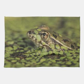 Rio Grande Leopard Frog, Rana berlandieri, Tea Towel