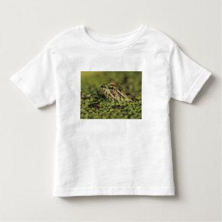 Rio Grande Leopard Frog, Rana berlandieri, Toddler T-Shirt
