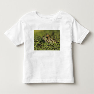 Rio Grande Leopard Frog, Rana berlandieri, T Shirt