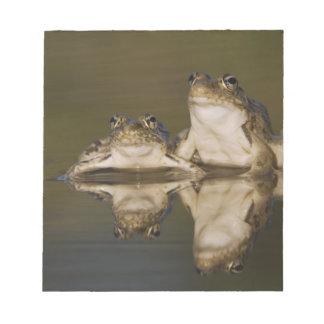 Rio Grande Leopard Frog, Rana berlandieri, two Notepad