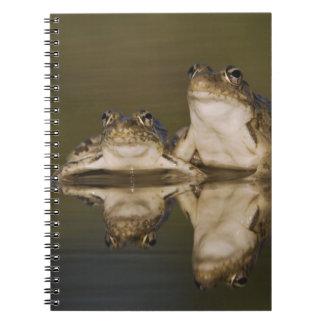 Rio Grande Leopard Frog, Rana berlandieri, two Spiral Note Book