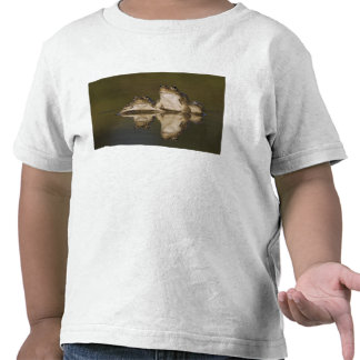 Rio Grande Leopard Frog, Rana berlandieri, two T-shirts