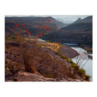 Rio Grande Running Through Chihuahuan Desert Postcard