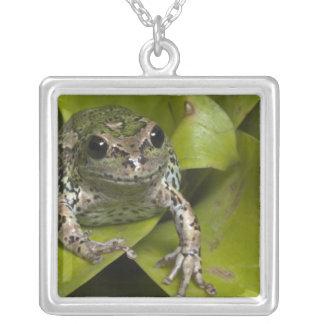 Riobamba Marsupial Frog Gastrotheca Square Pendant Necklace
