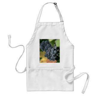 Ripe grapes on the vine apron