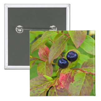 Ripe huckleberries in the Flathead National 15 Cm Square Badge