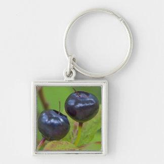 Ripe huckleberries in the Flathead National 2 Key Ring