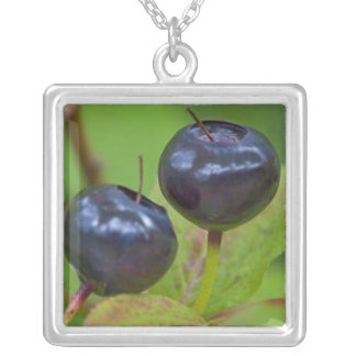 Ripe huckleberries in the Flathead National 2 Square Pendant Necklace