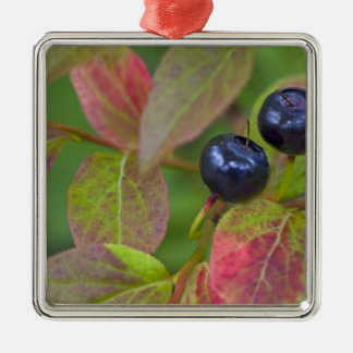 Ripe huckleberries in the Flathead National Christmas Ornament