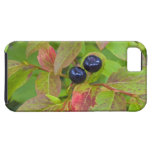 Ripe huckleberries in the Flathead National iPhone 5 Case