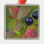 Ripe huckleberries in the Flathead National Silver-Colored Square Decoration