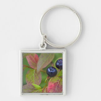 Ripe huckleberries in the Flathead National Silver-Colored Square Key Ring