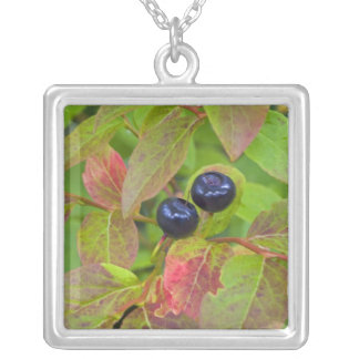 Ripe huckleberries in the Flathead National Square Pendant Necklace