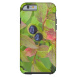 Ripe huckleberries in the Flathead National Tough iPhone 6 Case
