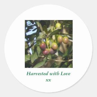 Ripe Olives Round Sticker