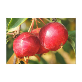 Ripe Red Crabapples Canvas Print