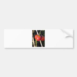Ripe tomatoes on a branch bumper sticker