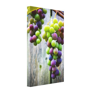 Ripening Grapes Canvas Print