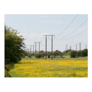Rising Sun Country Park Postcard