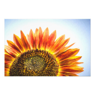 Rising Sunflower Photograph