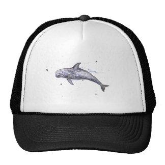 Risso Dolphin Illustration Cap
