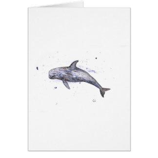 Risso Dolphin Illustration Card