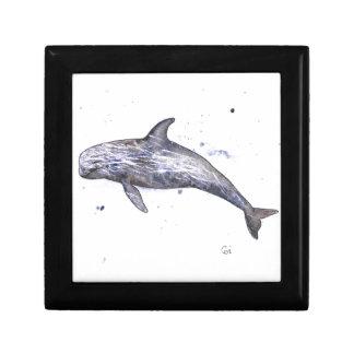 Risso Dolphin Illustration Gift Box