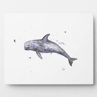 Risso Dolphin Illustration Photo Plaques