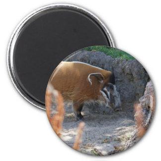River Hog 6 Cm Round Magnet