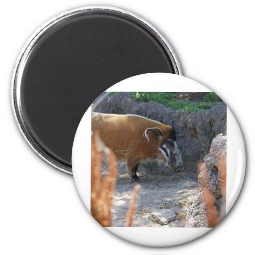 River Hog Magnets