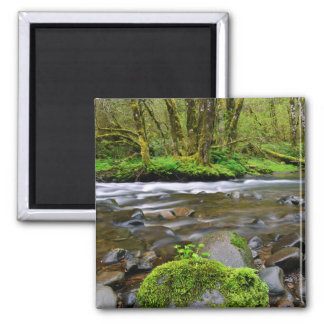River in green forest, Oregon Square Magnet