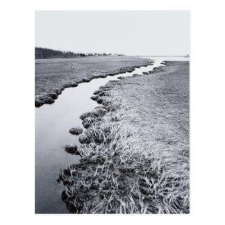 River Near Forest 2 Postcard