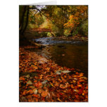 River of Leaves Card