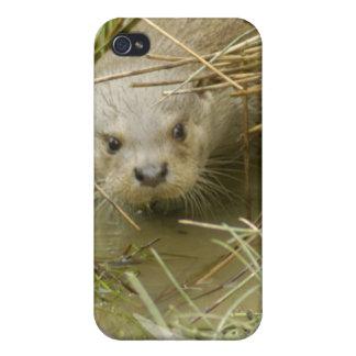 River Otter Habitat iPhone 4 Case