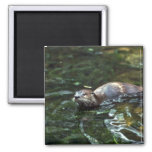 River Otter Magnets