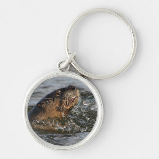 river otter Silver-Colored round key ring