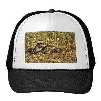 River Otters Trucker Hat