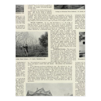 Riverdale Prune Orchard, California Postcard