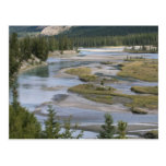 Rivers run through a lowland section of Jasper Postcards
