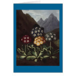 RJ Thornton - Group of Auriculas Greeting Card