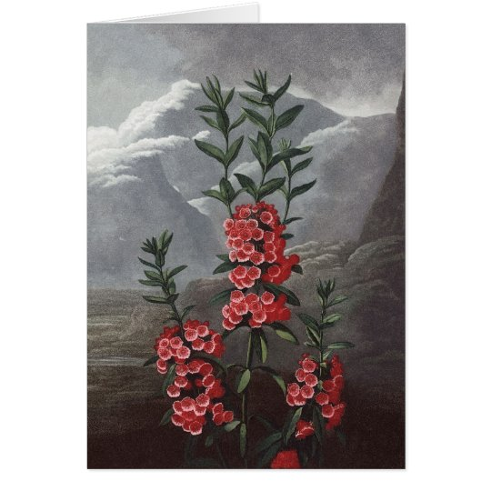 RJ Thornton - Narrow-leaved Kalmia Card